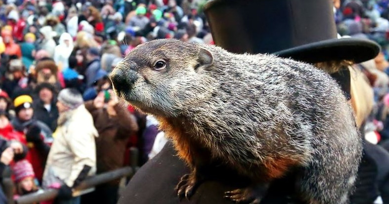 Groundhog Day Forecast - 6 More Weeks of Winter - Silly Groundhog!